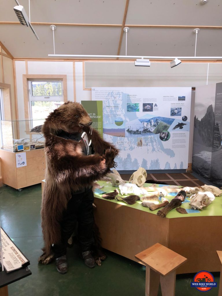 A friendly grizzly bear at the Tombstone Park Interpretive Centre on the Dempster Highway.