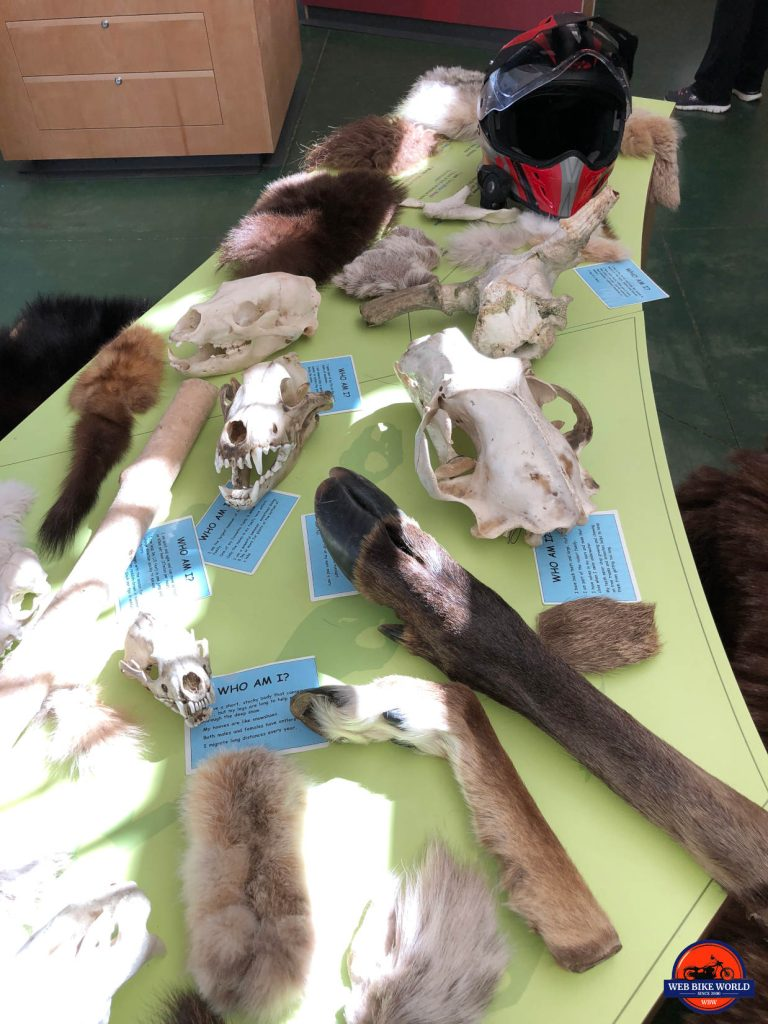 An interactive display of animal parts at the Tombstone Park Interpretive Centre on the Dempster Highway