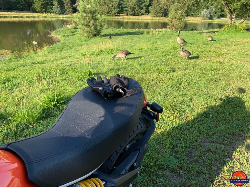 2019 Ducati Scrambler Icon being admired by the local wildlife