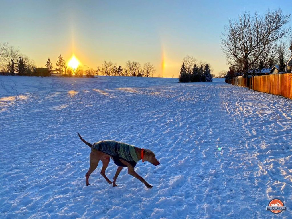 My dog playing at the park in Airdrie, Alberta, Canada.